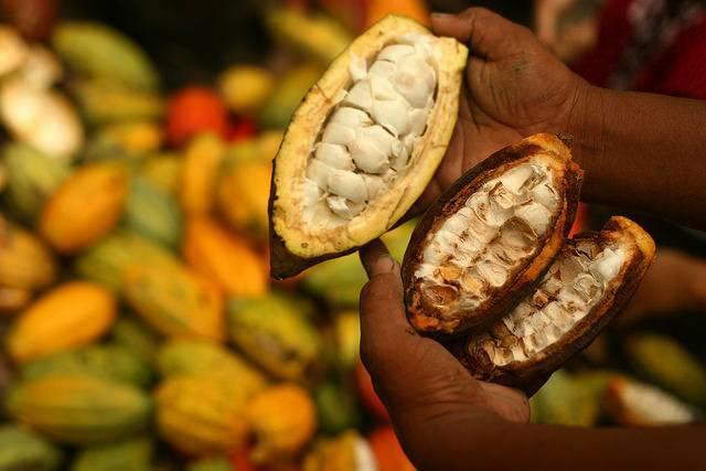 A-cocoa-farm-in-Indonesia.jpg