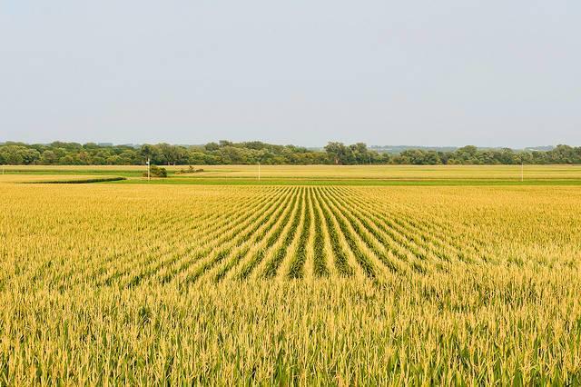 A-corn-farm-in-rural-Iowa.jpg