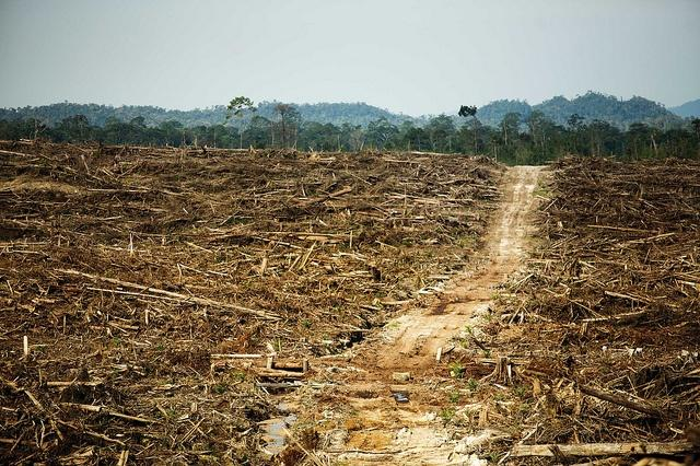 A-deforested-area-on-Borneo-attributed-to-palm-oil-production.jpg