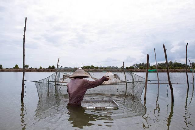 A-shrimp-farm-in-Indonesia.jpg