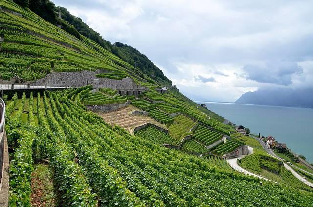 A-vineyard-in-the-Lavaux-region-of-France.jpg