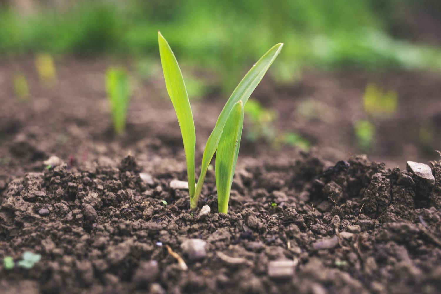 Agricultural subsidies and the SDGs
