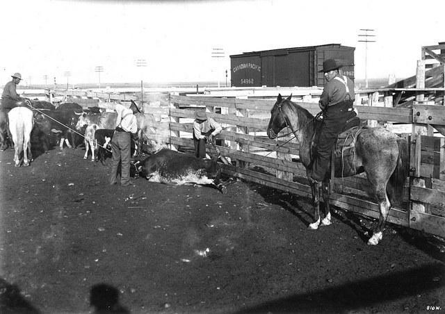 Alberta-Beef.jpg