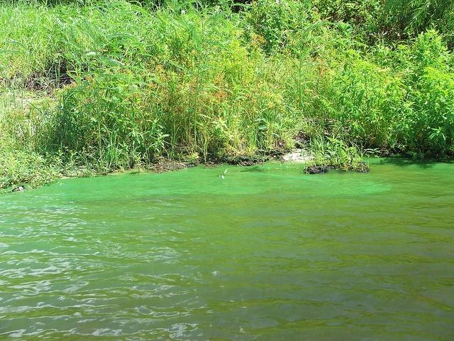 Algae-blooms-are-wrecking-Floridas-scenery-and-economy.jpg