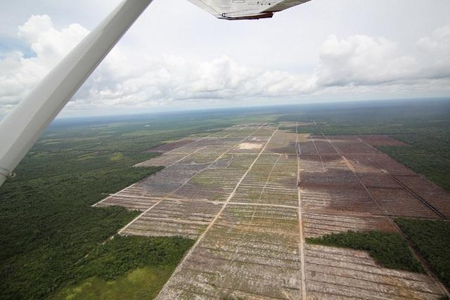 An-aerial-view-of-deforestation-due-to-palm-oil-production-in-Indonesia.jpg