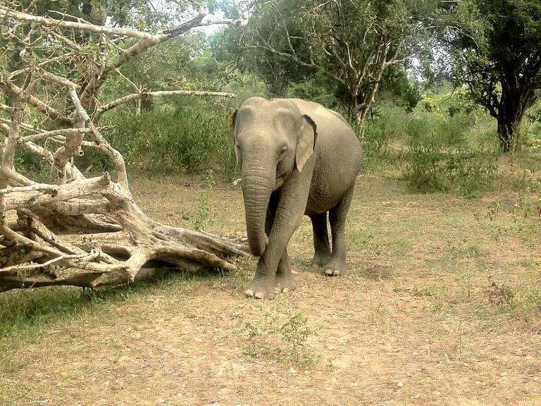 An-elephant-at-a-Sri-Lanka-wildlife-reserve.jpeg