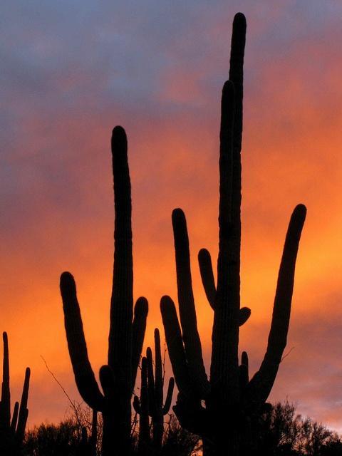 Arizona-cactus.jpg