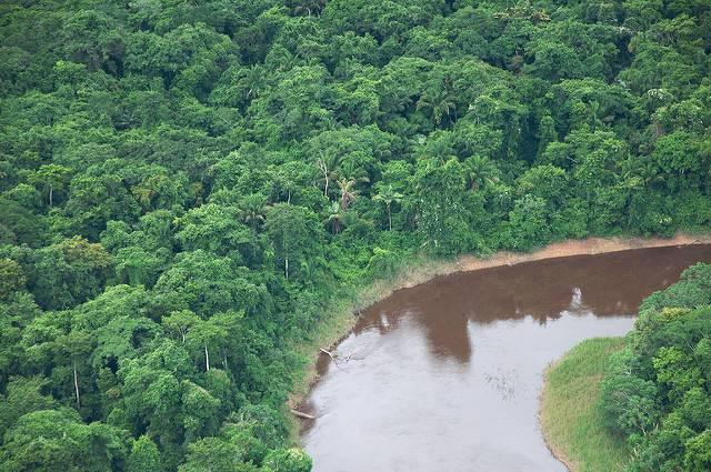 Bolivias-forests-are-one-region-succeptible-to-soy-and-cattle-production.jpg