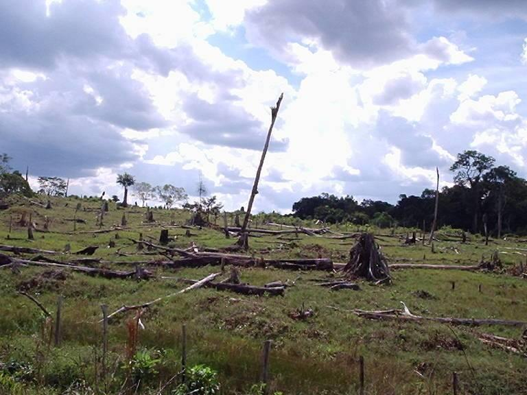 Brazil_deforestation_DanieleGidicki.jpg