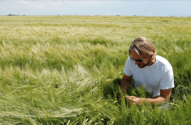 Brian-Neufeld-checking-barley-in-San-Luis-Valley-Colorado.png