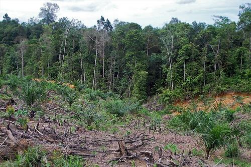 CIFOR-Cleared-Land.jpg
