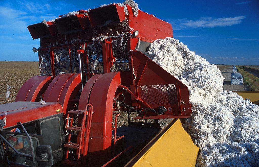 Can-organic-cotton-make-a-difference.jpeg