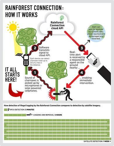Cell_phone_Deforestation_Rainforest_CX.jpg