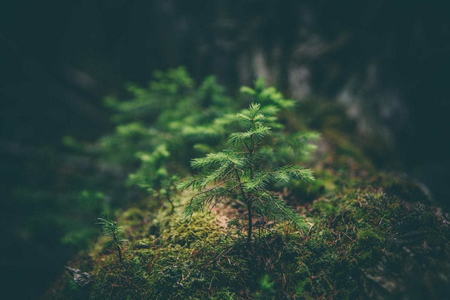 Certified Sustainable Forests