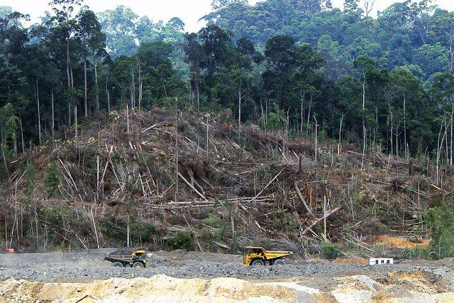 Coal-mining-projects-such-as-this-one-in-central-Borneo-are-devastating-Indonesian-forests.jpg