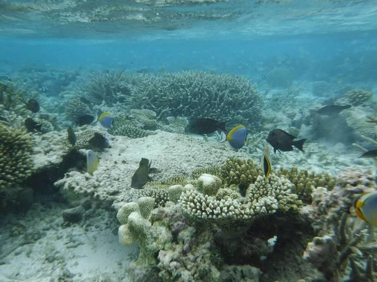 Coral-reefs-in-Ohmadoo-Maldives.jpg