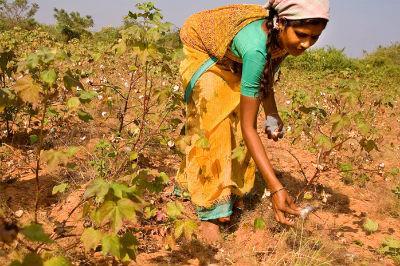 Cotton_picking_in_India.jpg