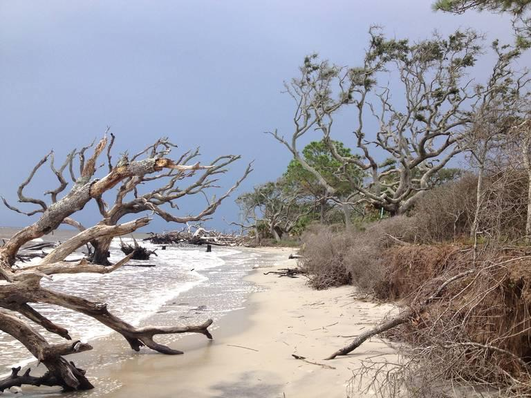 Dead-trees-along-Jekyll-Island-Georgia.jpeg