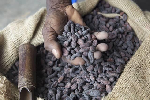 Dried-cocoa-beans-produced-in-Ghana.jpg