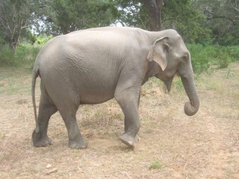 Elephant-Sri-Lanka.jpg