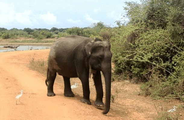 Enjoy-the-elephants-at-a-distance-says-TripAdvisors.png
