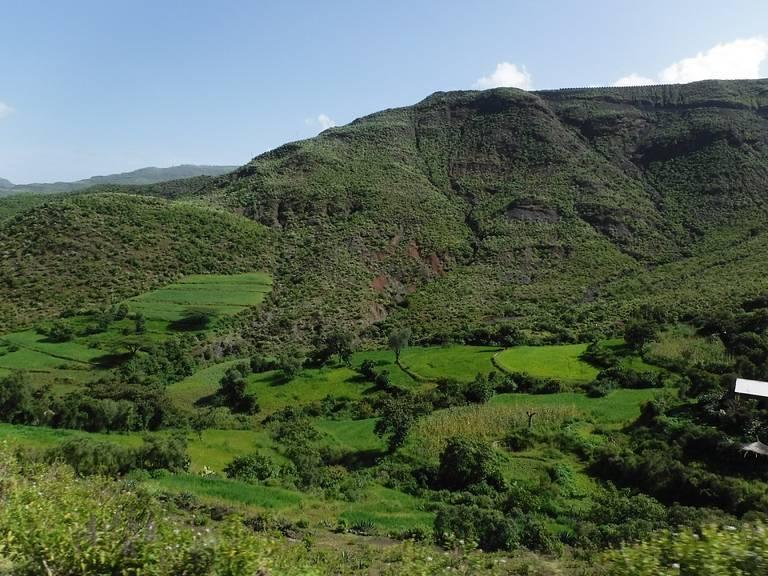 Ethiopia-Farming-3.jpeg