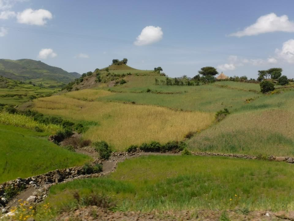 Ethiopias-farms-could-suffer-if-forecasts-about-long-term-precipitation-rates-prove-true.jpg