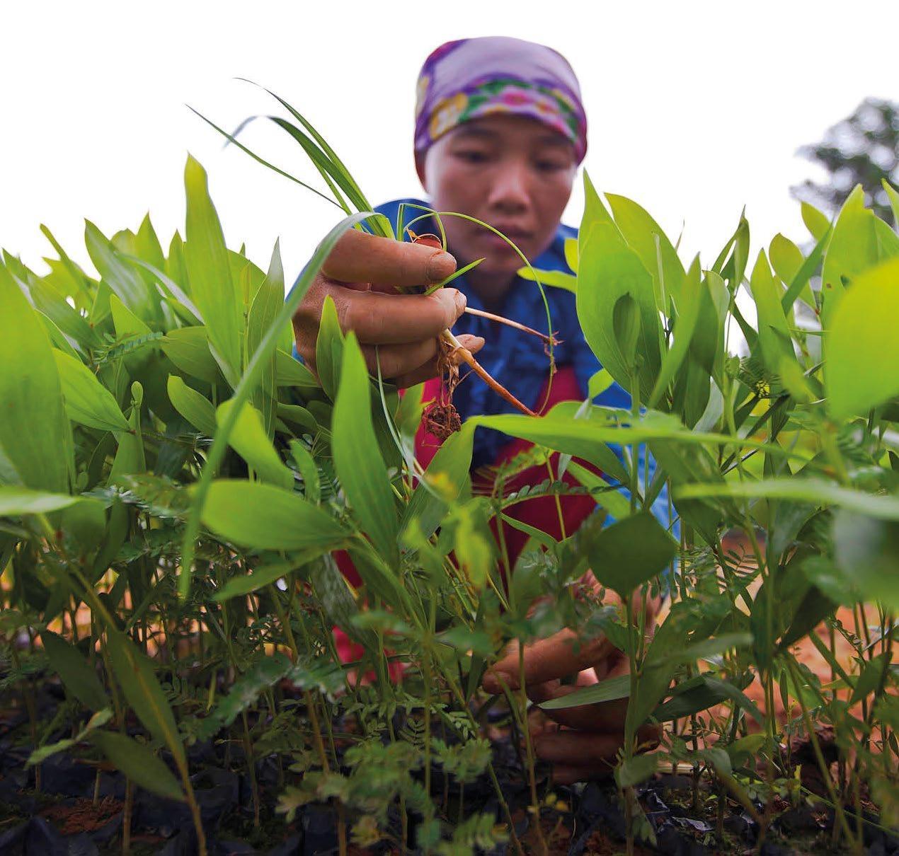 FAO-Local_EWH-7132-0.jpg