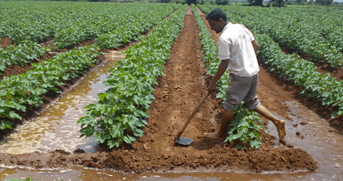 Farmers-are-the-foundation-of-the-sustainable-cotton-movement.png