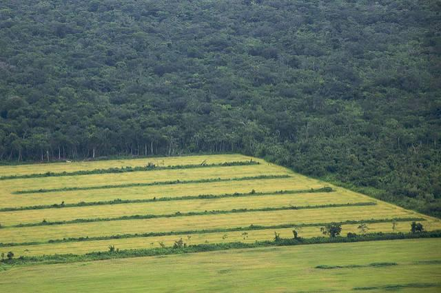 Farming-in-the-Amazon.jpg