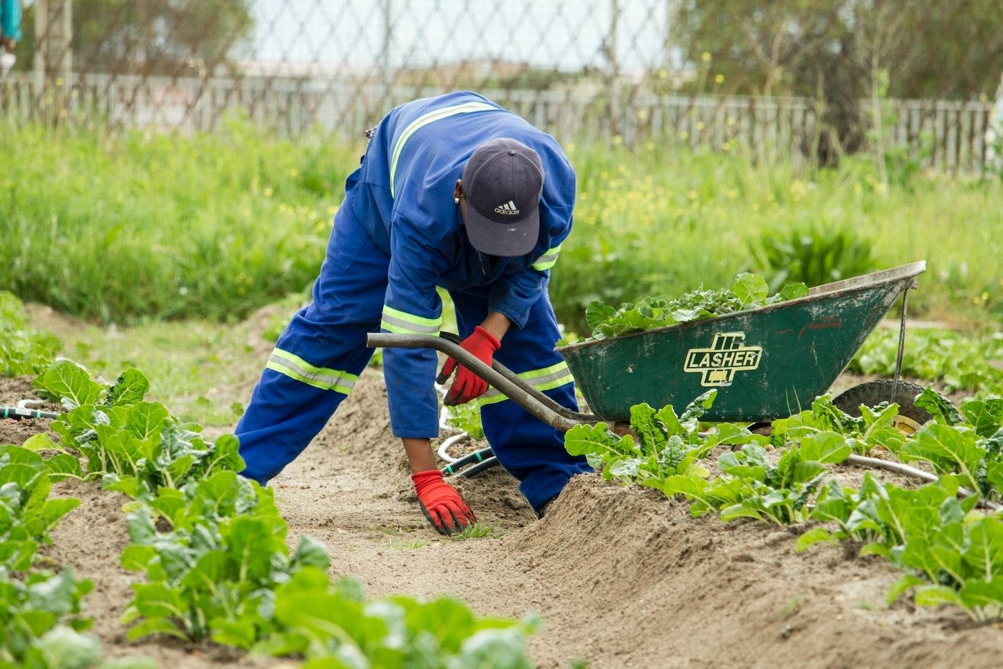 farmworkers essential workers