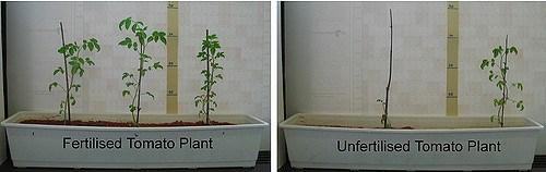 Fertilizer_poverty_plants_SuSanASecretariat.jpg