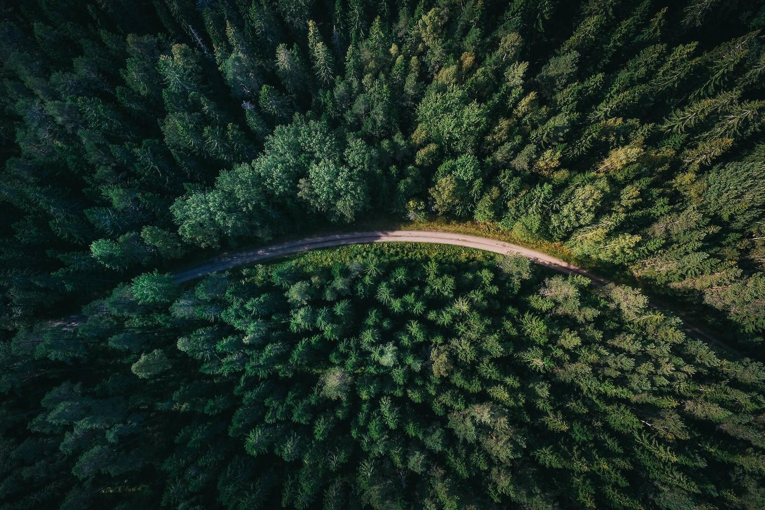 Forests and Climate Action