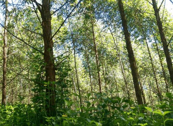 Forests-are-the-earths-lungs-and-the-Bonn-Challenge-seeks-to-increase-their-capacity.png