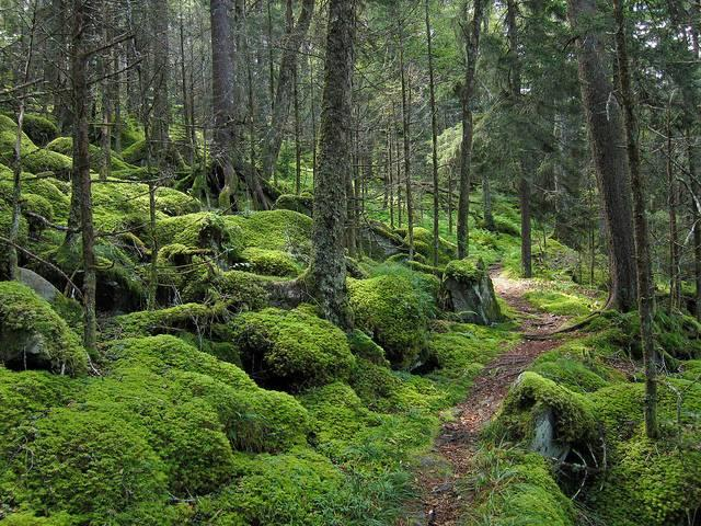 Forests-in-the-Great-Smoky-Mountains.jpg