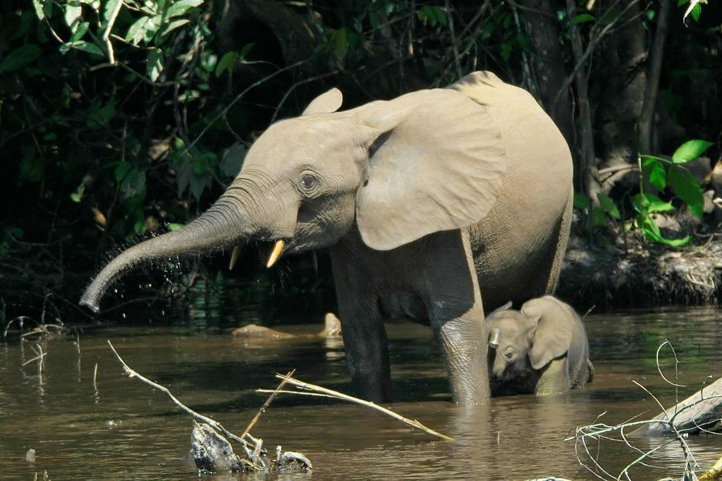 Gabons-rainforests-are-rich-in-wildlife1.jpg