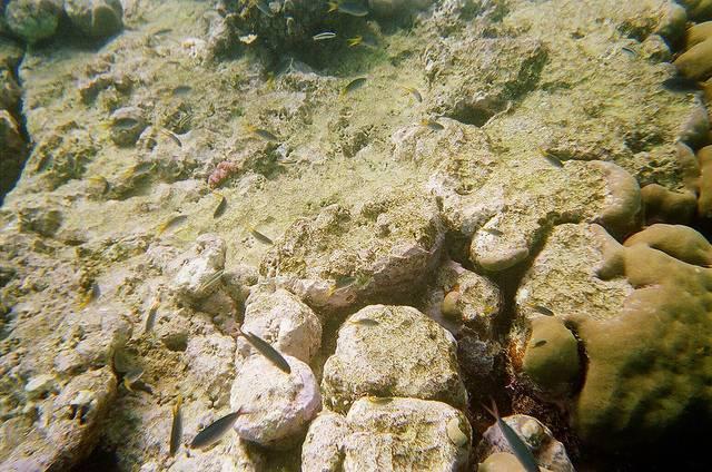 Great_Barrier_Reef_bleached_JorgeLascar.jpg