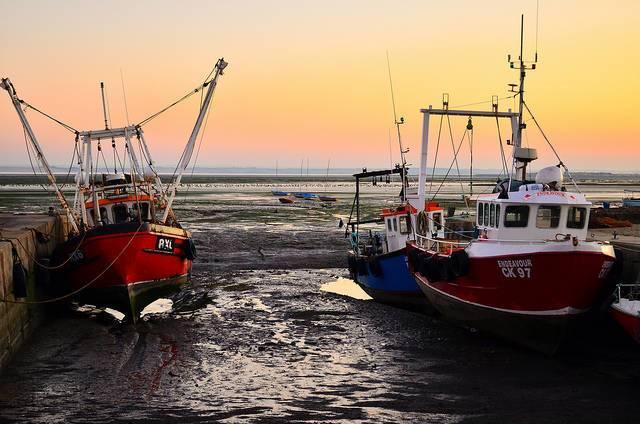 Greenpeace-fishing-report.jpg