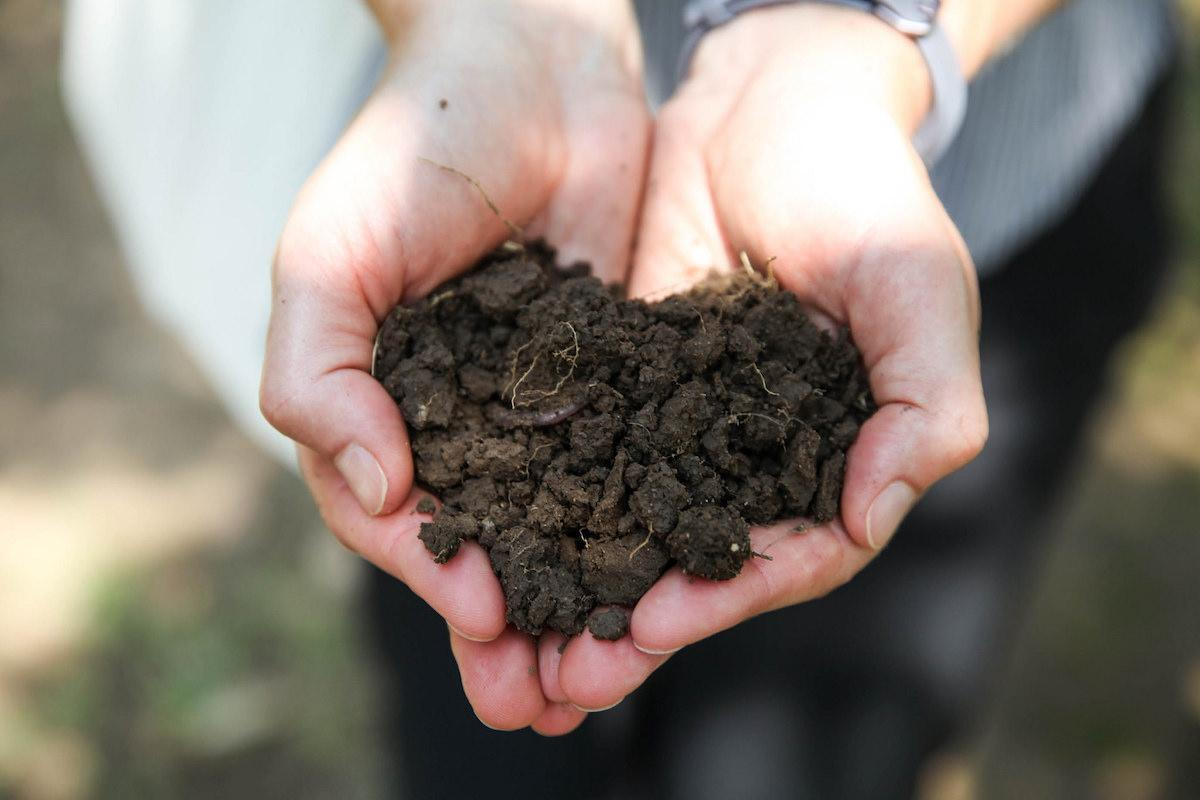 Hands-in-dirt-Chico-State-Tif-Tran.jpg