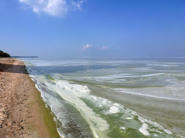 Lake-Erie-algal-bloom_michiganseagrant.jpg