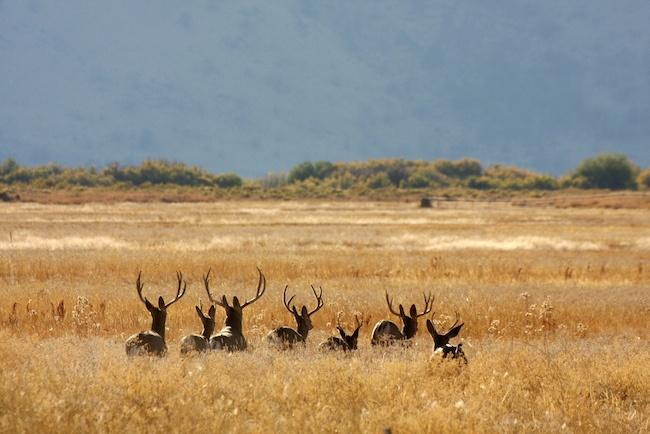 Malheur-National-Wildlife-Refuge-.jpg