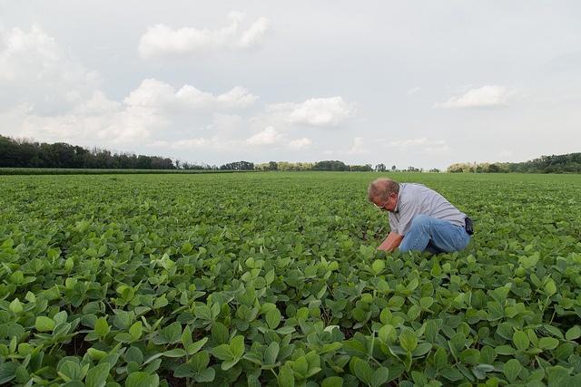 Monsanto_sustainability_soy_board1.jpg