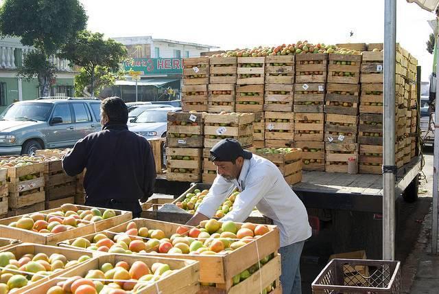 NAFTA_tomatoes_wisley.jpg