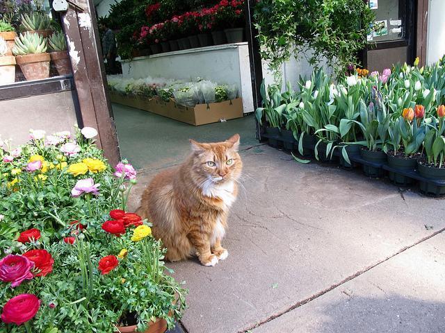 New-York-City-Chelsea-Flower-District.jpg