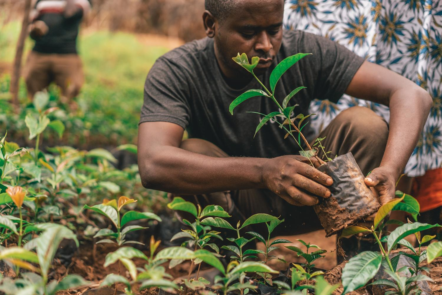 Like a Well-Planted Tree, Corporate Sustainability with Deep Roots Will Outlast the Pandemic