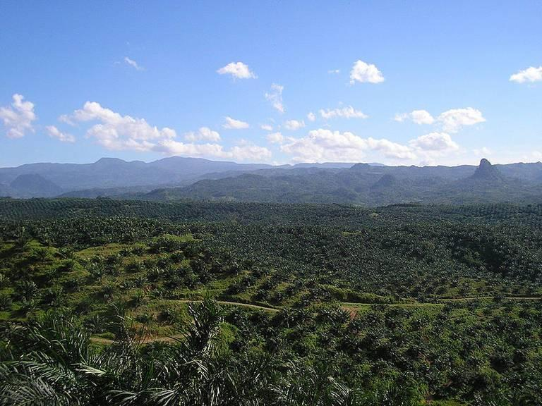 Palm-Oil-Plantation1.jpg