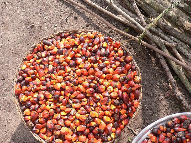 Palm-oil-fruit-cultivated-in-Ghana.jpg