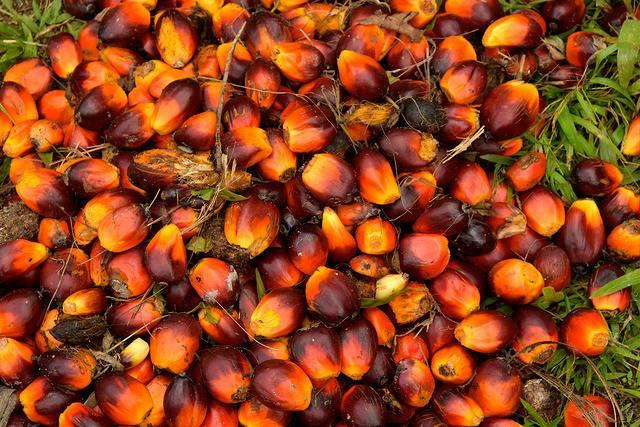 Palm-oil-fruit-freshly-harvested-in-Indonesia.jpg