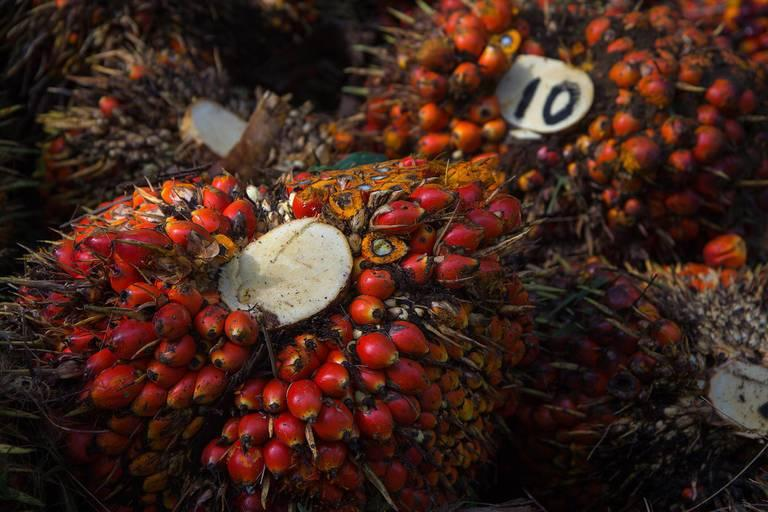 Palm-oil-is-used-in-nearly-half-of-modern-consumer-packaged-goods-from-chips-and-candy-to-cosmetics.jpg