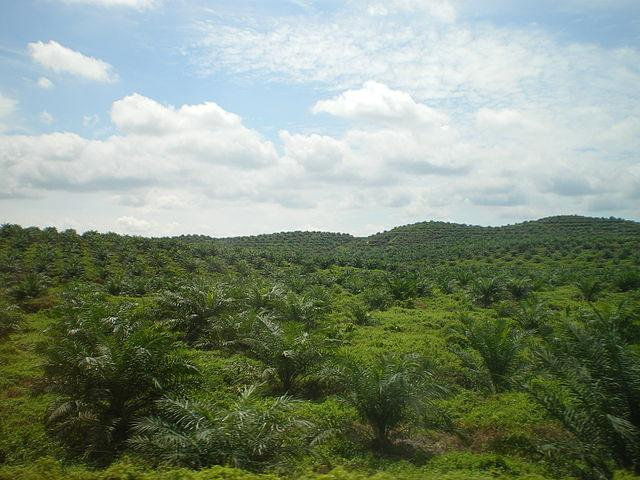 Palm-oil-plantation-in-East-Malaysia.jpg